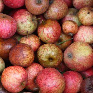 Pommes_à_cidre